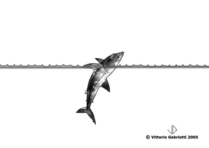 Grande squalo bianco immagini di vittorio gabriotti for Immagini squali da colorare